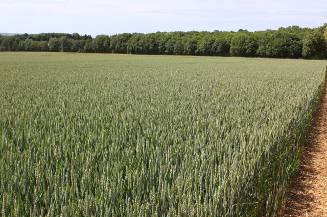 Countryside Stewardship Funding